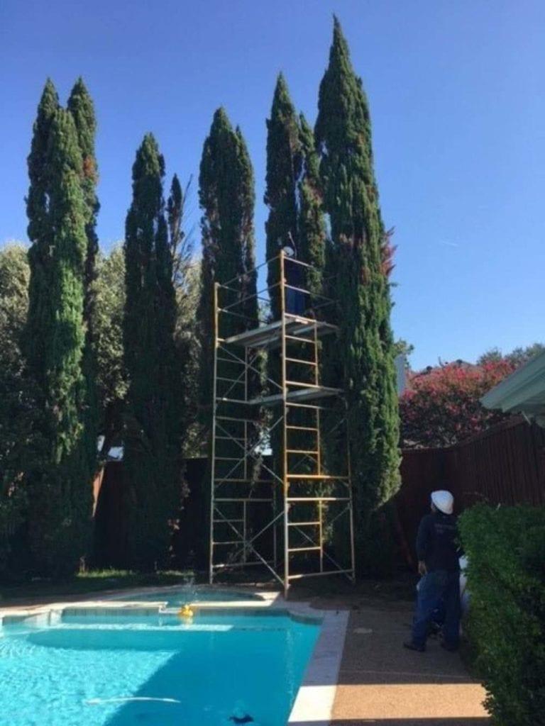 Arbor Scaffolding
